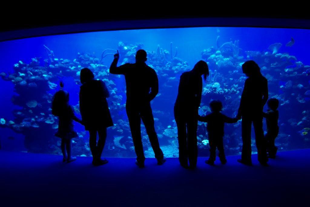 Palma Aquarium © No Frills Excursions / Flickr