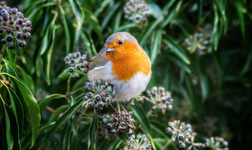 Bird   © Andrew Alexander / Unsplash