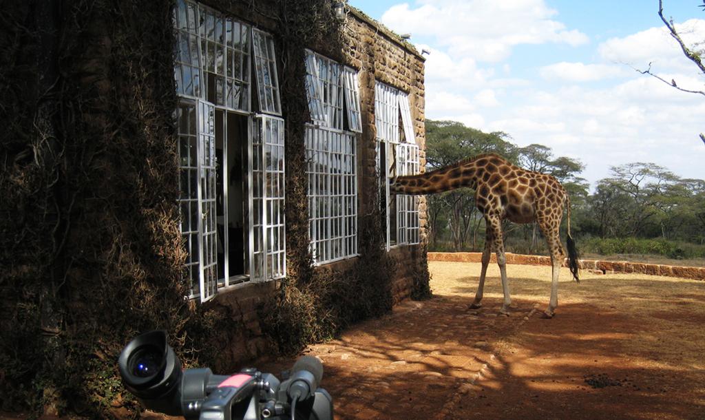 Giraffe│© Jake/ Flickr