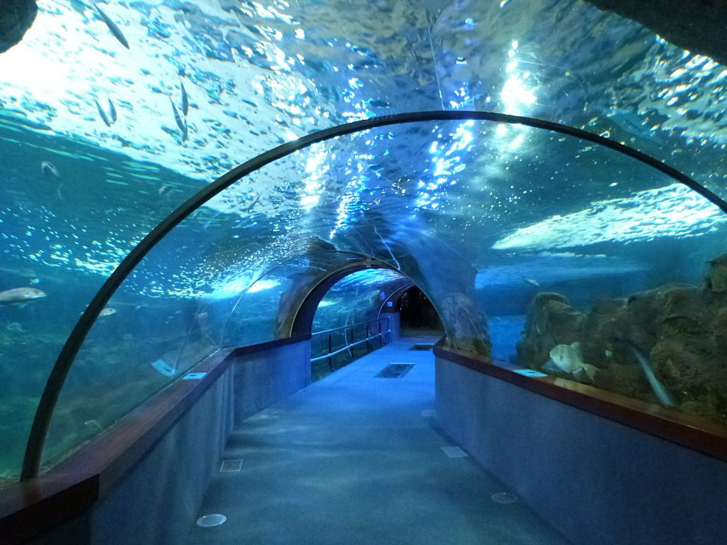 Aquarium Donostia | ©Catatine / Wikimedia Commons