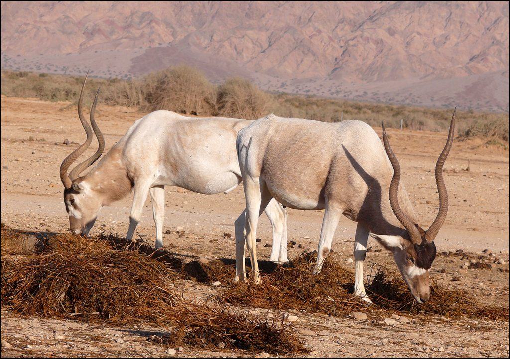 Wildlife in Israel's Arava desert | © Zachi Evenor / Flickr