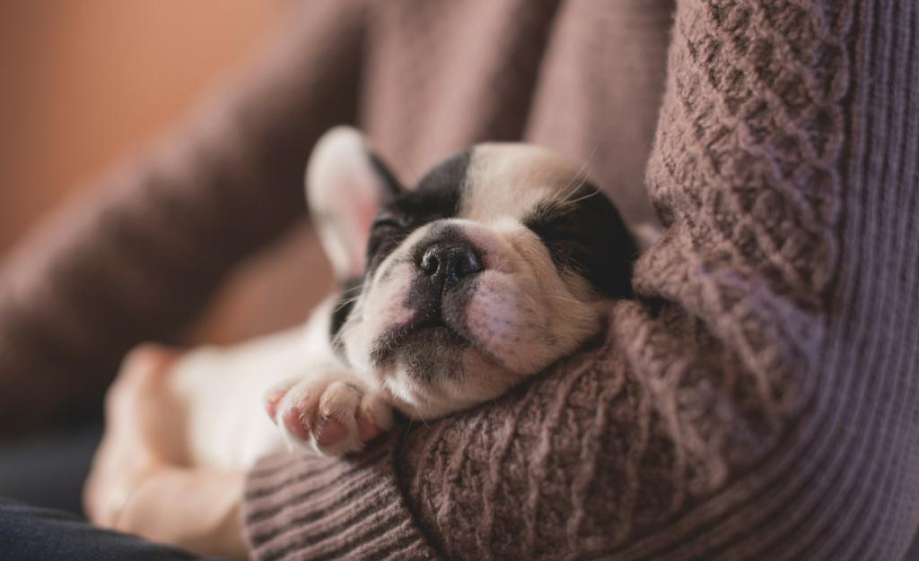"""""""Shame, a puppy"""""""