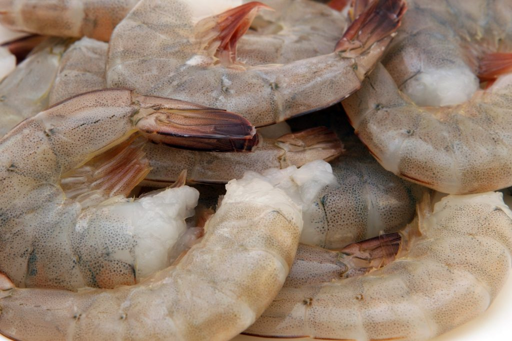 Grey shrimp | public domain / Pixabay
