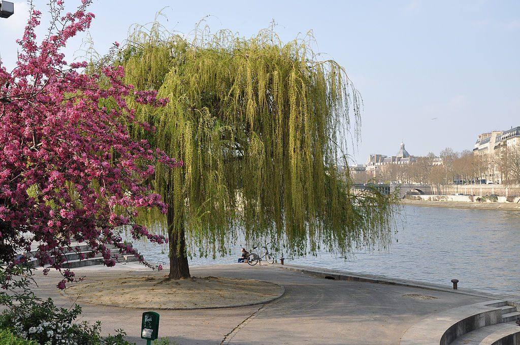 Jardin Tino Rossi │© Moonik / Wikimedia Commons