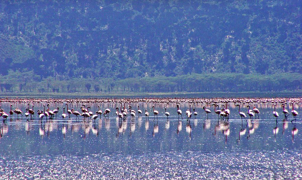 Flamingos on Lake Nakuru | © Tambako the Jaguar/Flickr