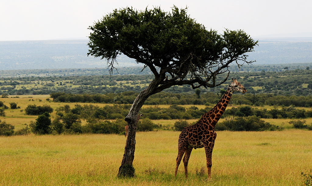 Maasai Mara   © Son Of Groucho/Flickr