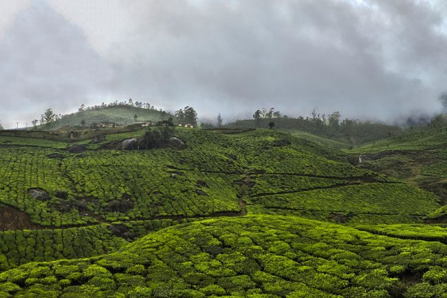 A cloudy sky over tea fields in the Western Ghats, Kerala | © Jakub Michankow/Flickr
