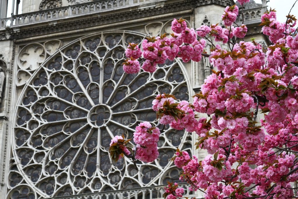Notre-Dame │© Chris Waits / Flickr
