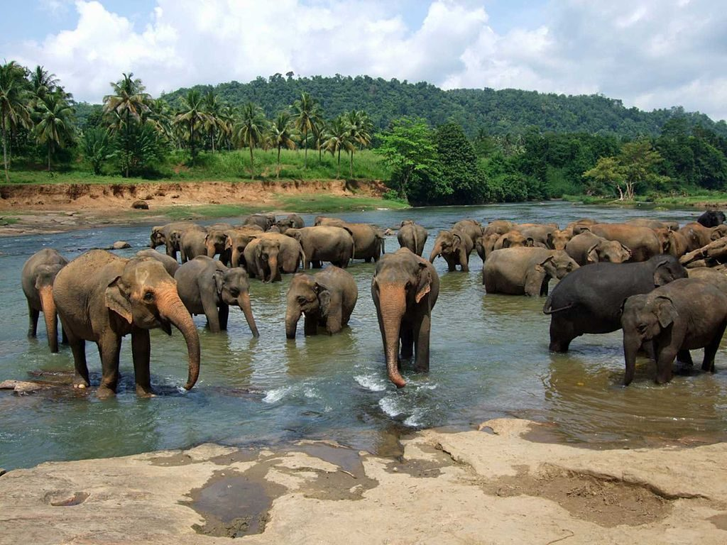 Pinnawala Elephant orphanage | © Amila Tennakoon / Wikimedia Commons