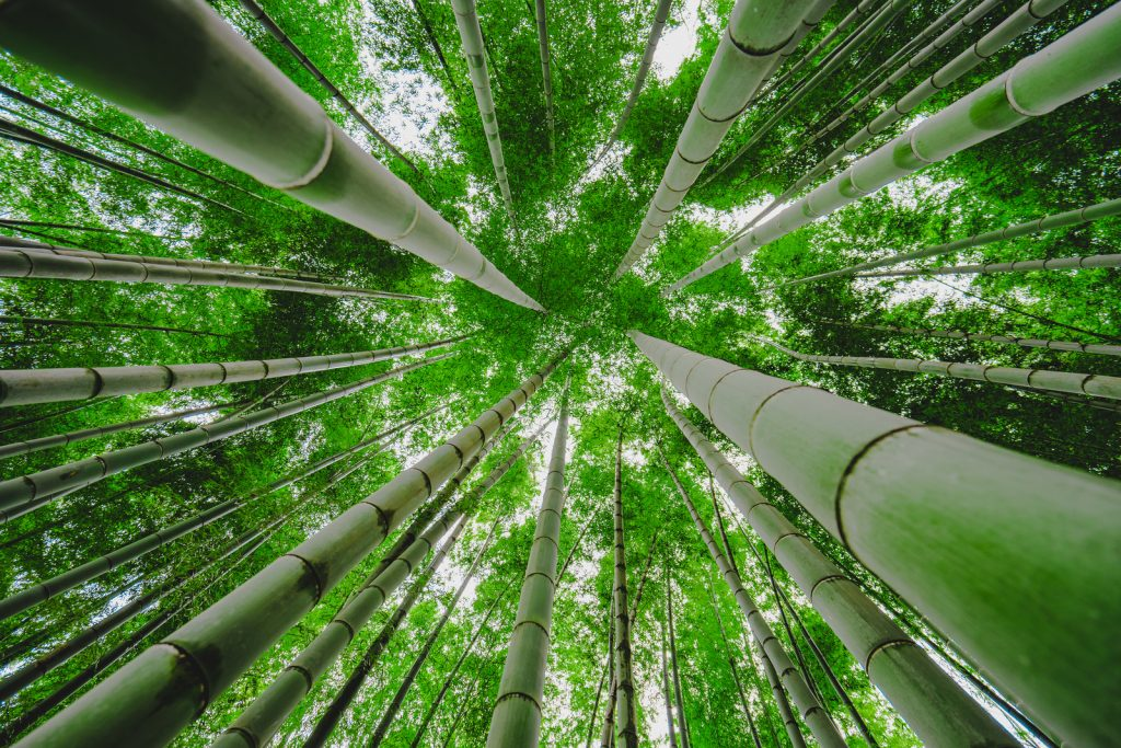 Looking up in a bamboo forest | © aotaro / Flickr