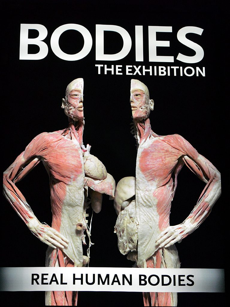 Bodies the Exhibition | © Daniel Orth/Flickr