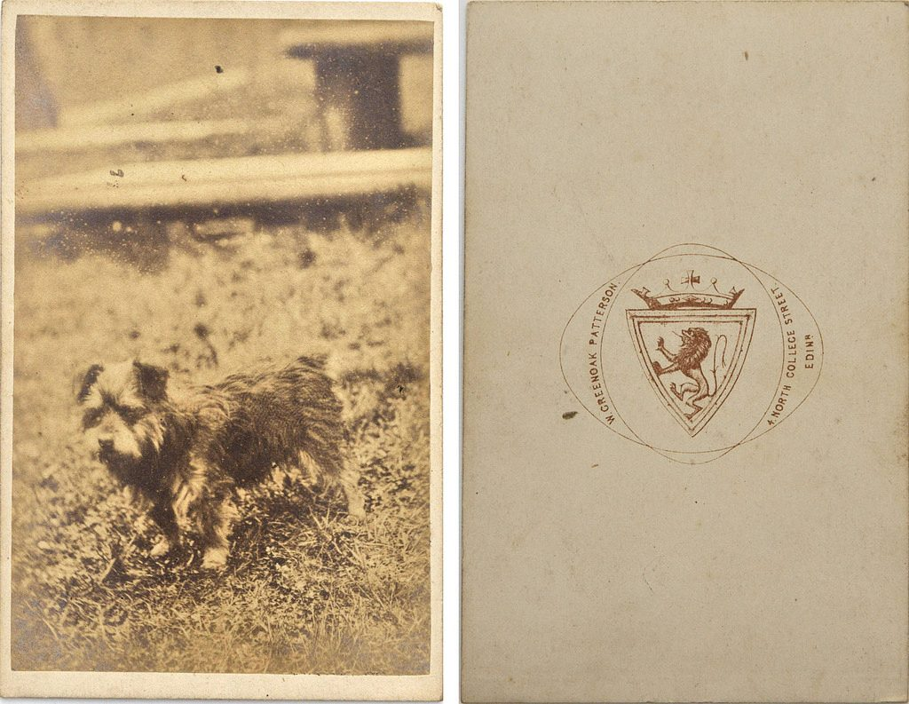 Portrait of dog, possibly Greyfriars Bobby, by Walter Greenoak Patterson | © Photos of the Past/Flickr