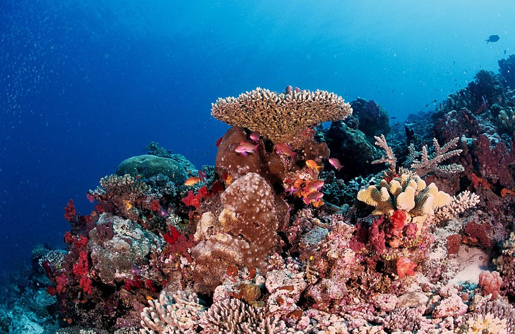The Best Pacific Islands For Scuba Diving