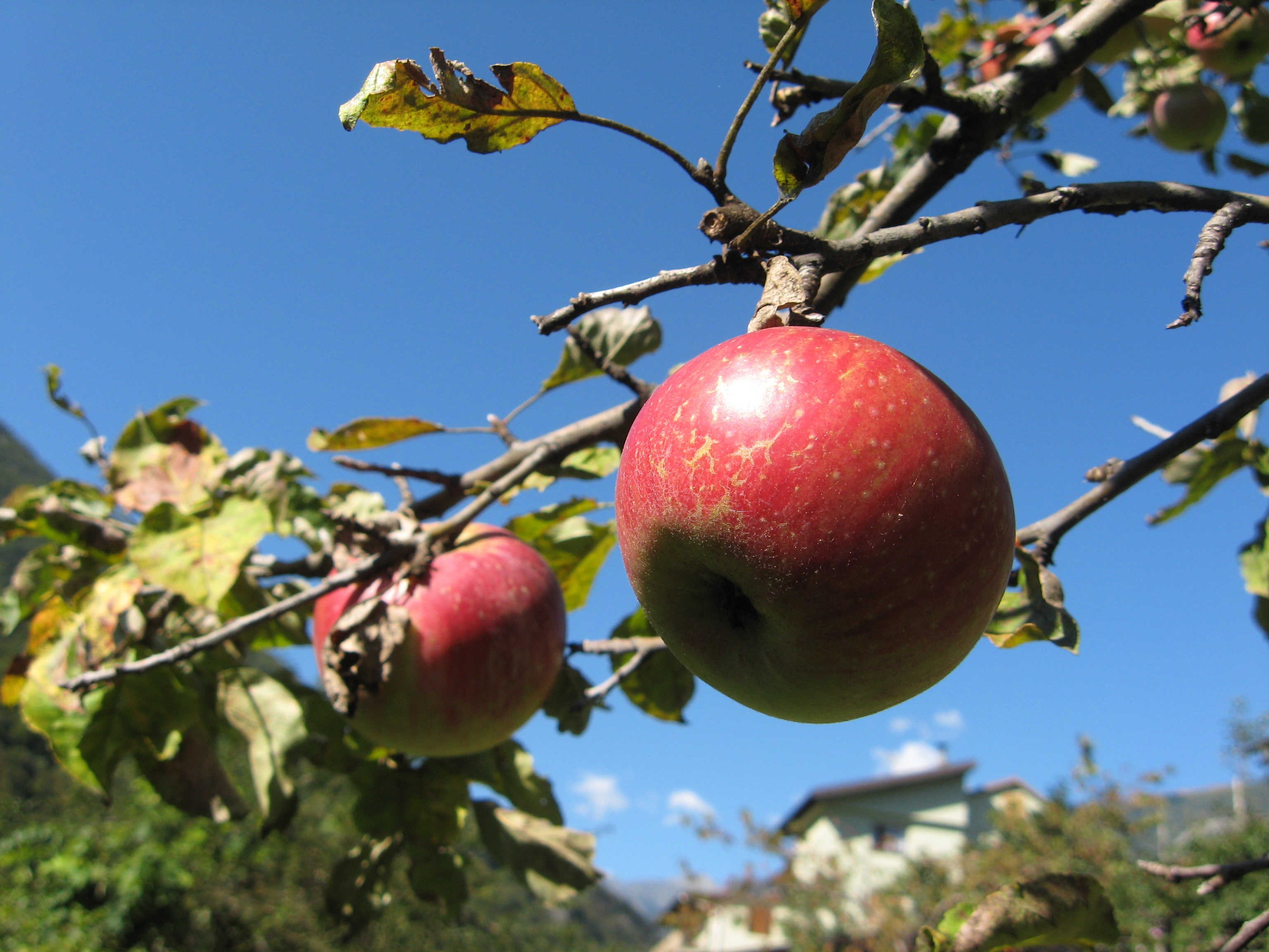 An introduction to the lithuanian language in 10 idioms an apple tree buycottarizona