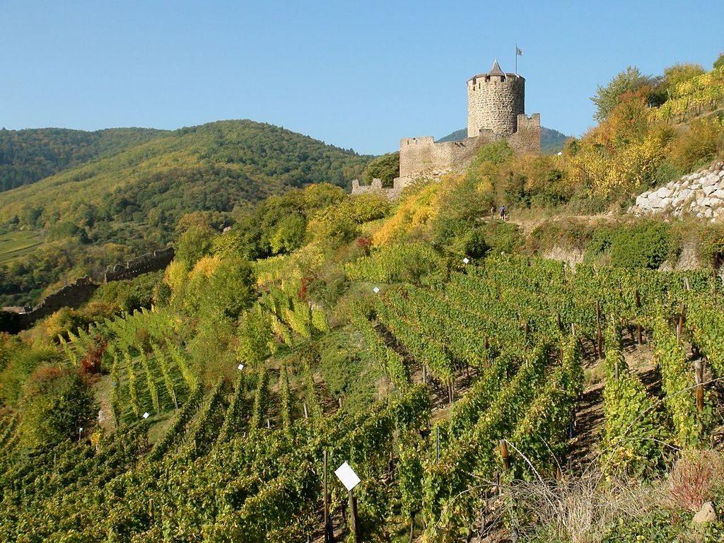 Castle of Kaysersberg │© Anselrene / Wikimedia Commons