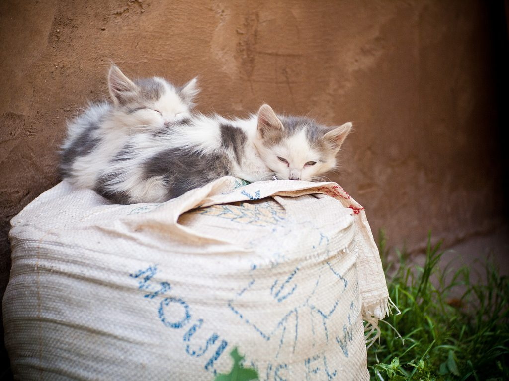 all the ways travelers can help marrakech u0027s street cats