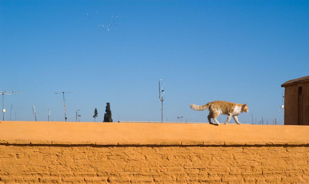Cat in the medina