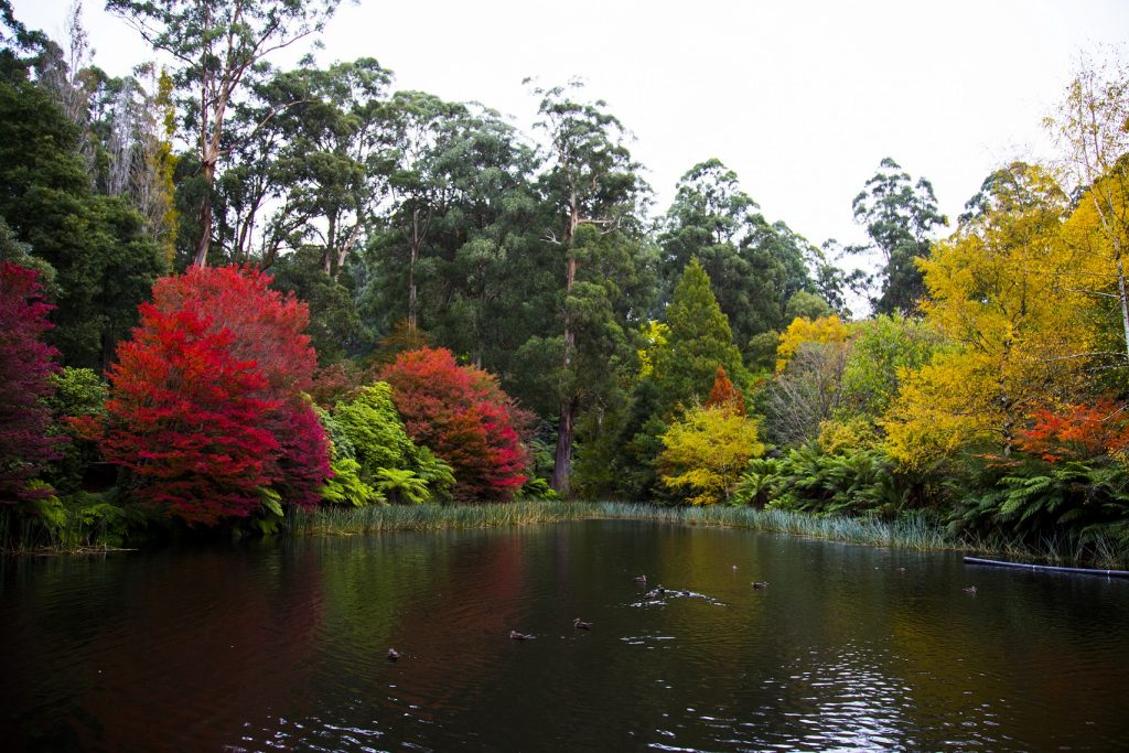 The Most Beautiful Places To See Autumn Leaves In Melbourne