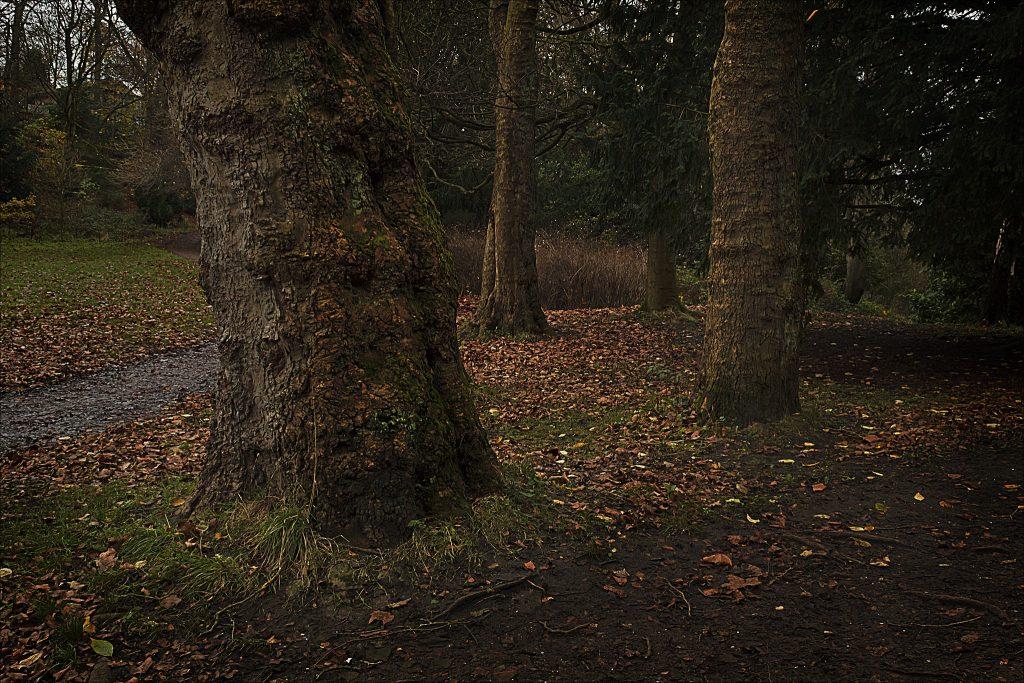 Jesmond Dene   © dun_deagh/Flickr