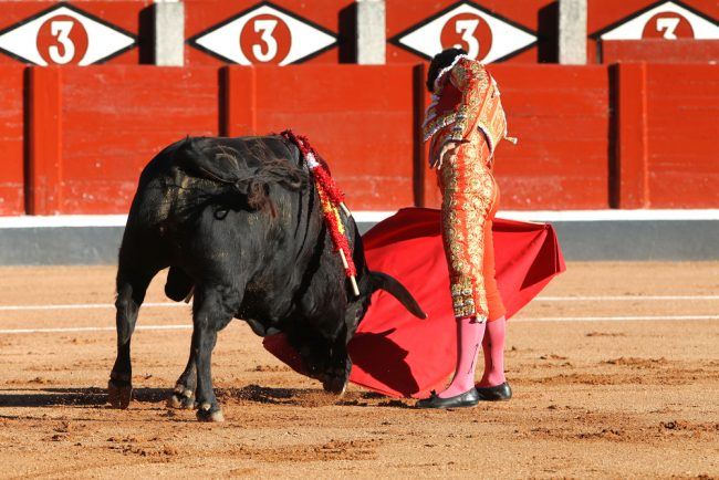 """the senseless torture of animals during bullfighting The romance and reality of bullfighting courageous"""" to torture an innocent animal to and torture' of bulls (and horses) during the cruel."""
