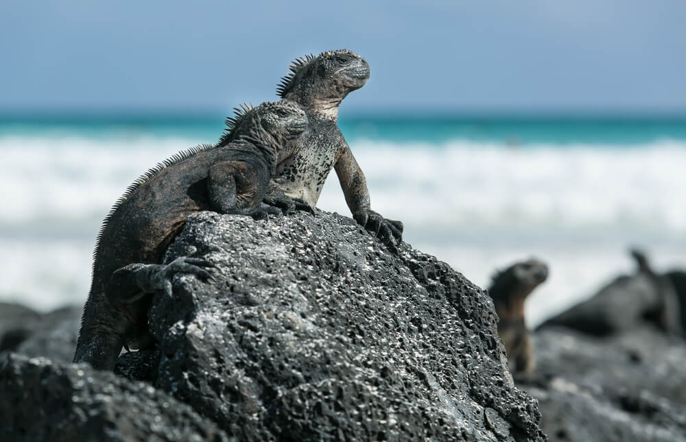 the best of culture in galapagos islands  ecuador