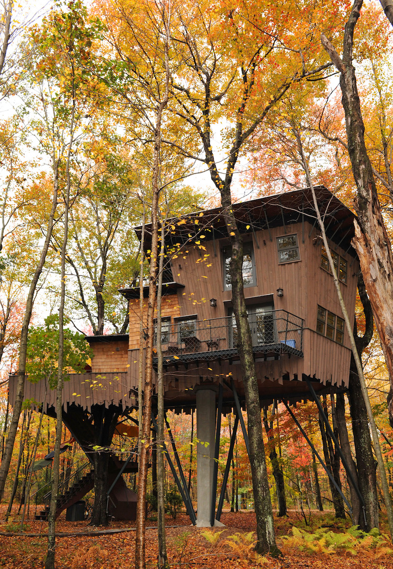 Building A Treehouse Between Two Trees Extraordinary Home