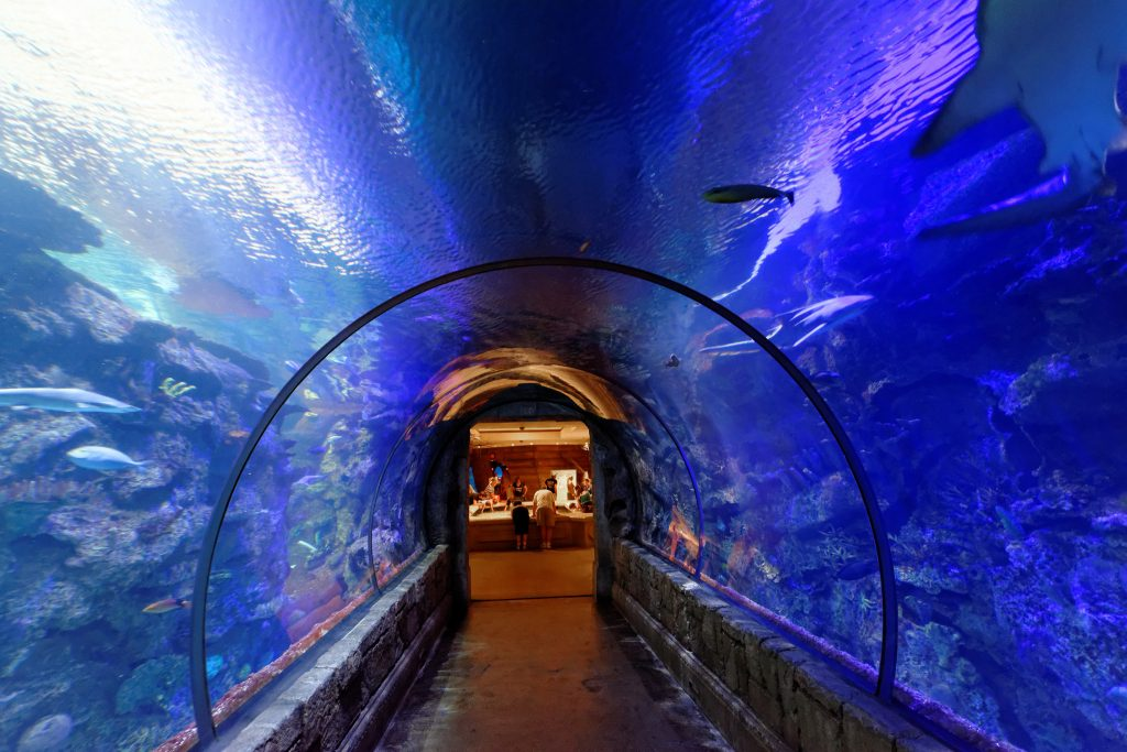 Tunnel inside Shark Reef | © Daniel Ramirez/Flickr