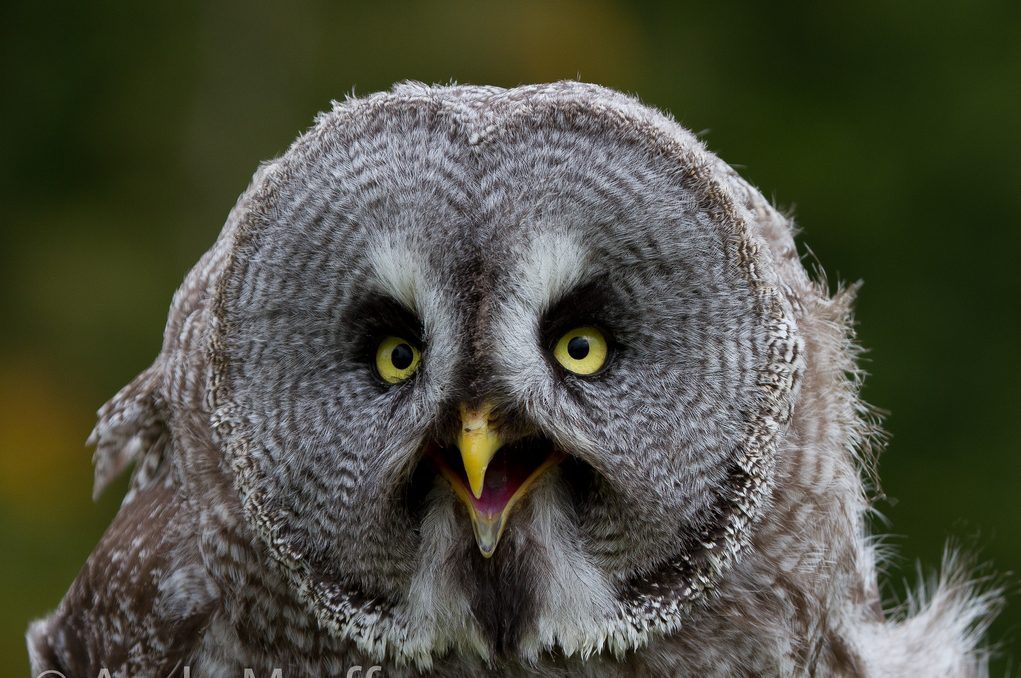 Scottish Owl Centre | © Andy Morffew/Flickr