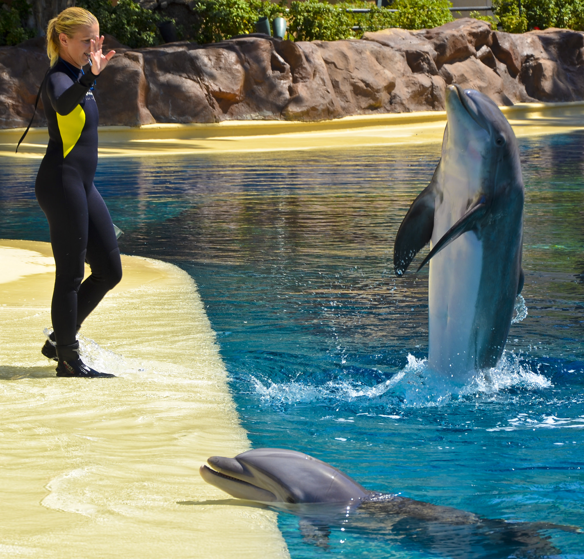 Dolphin training inside the Secret Garden | © Tomas Del Coro/Flickr