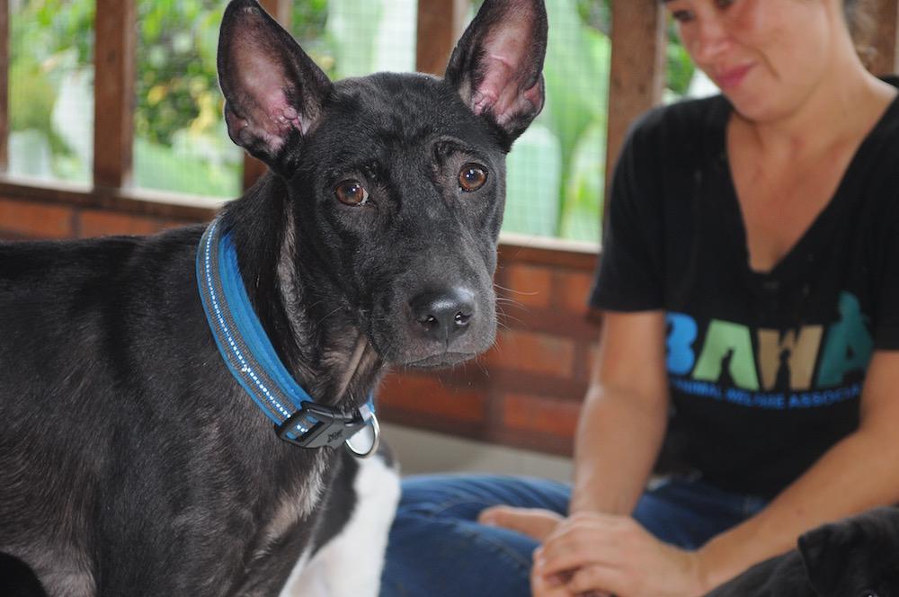 BAWA Rescued dog   © Nikki Vargas
