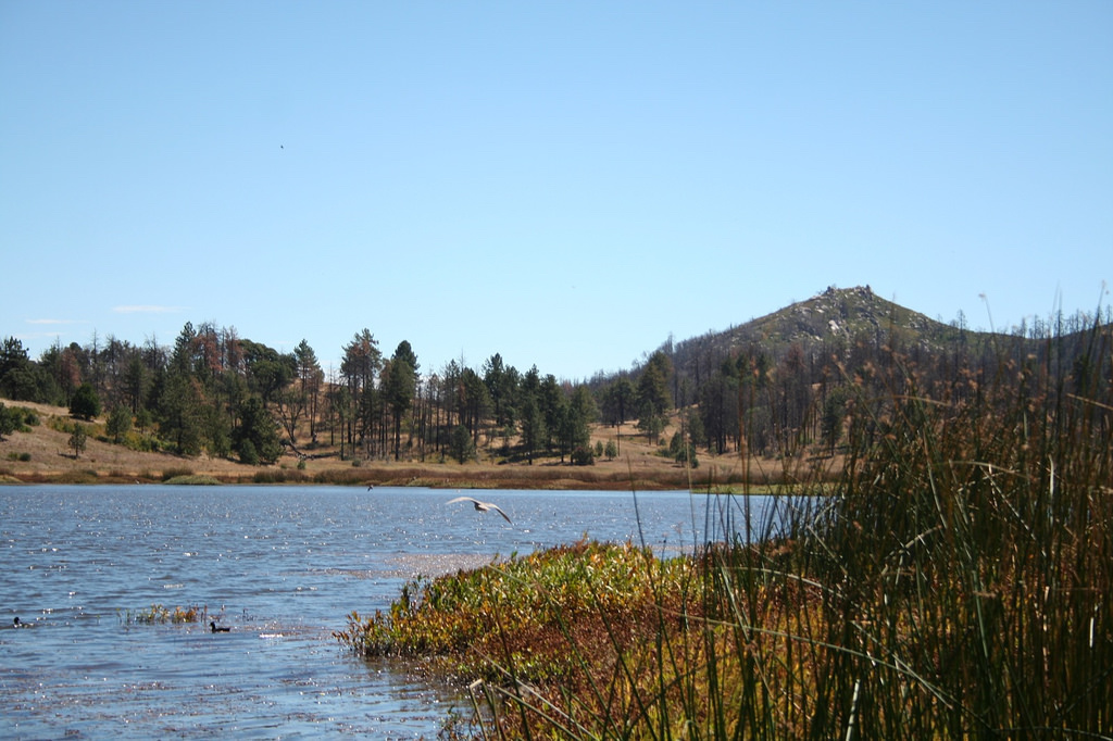 The best places to go fishing in southern california for Lake cuyamaca fishing