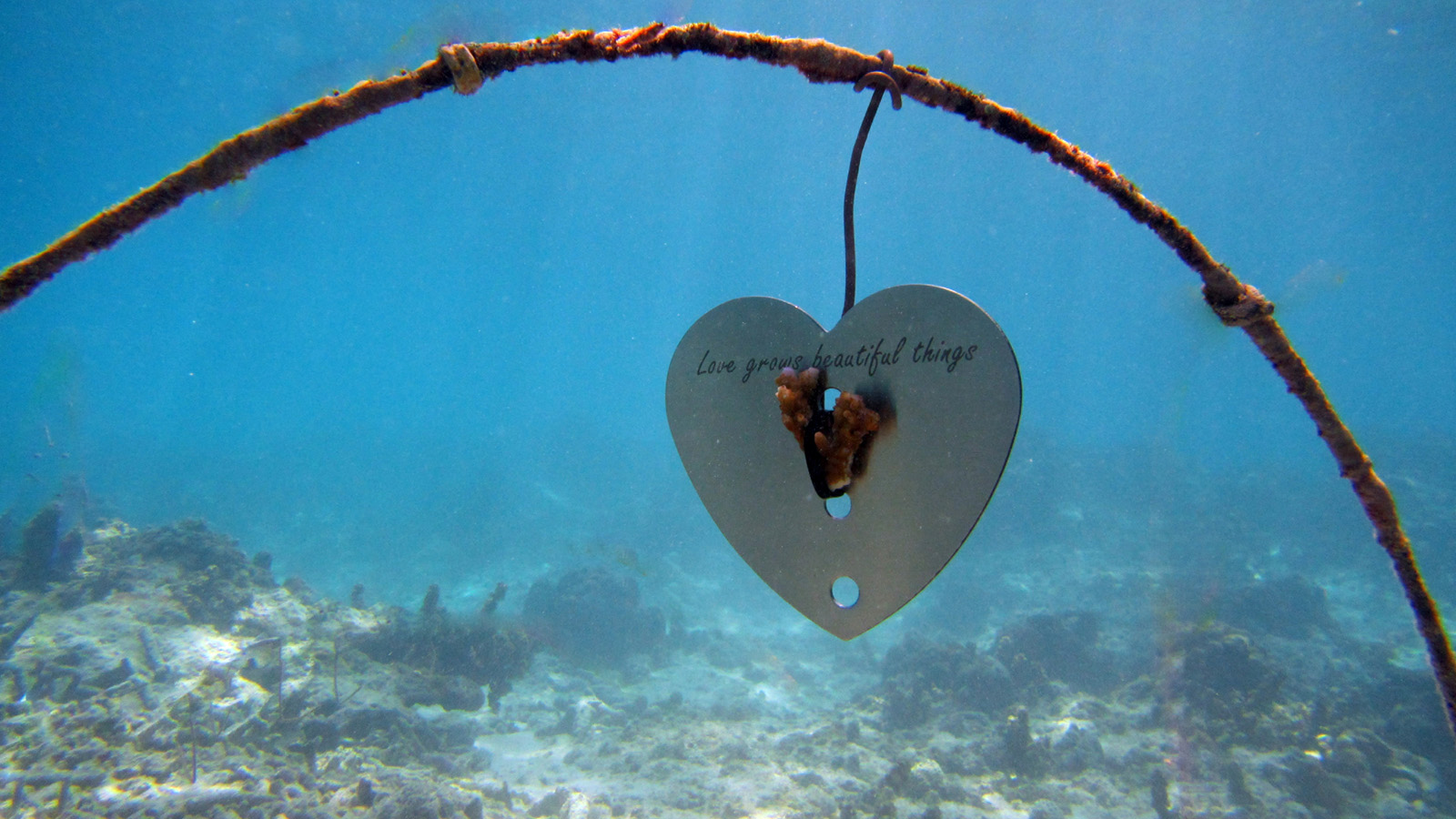 12 reasons to visit seychelles at least once - world class diving