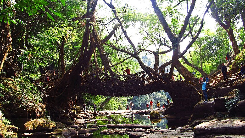 Living Root Bridge in Mawlynnong | © Kiranjit / Wikimedia Commons