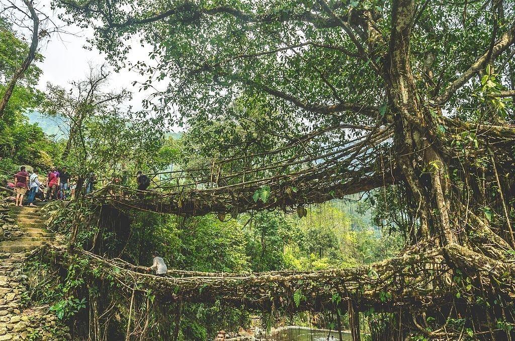 Double Decker Living Root Bridge in Nongriat Village   © Sai Avinash / Wikimedia Commons