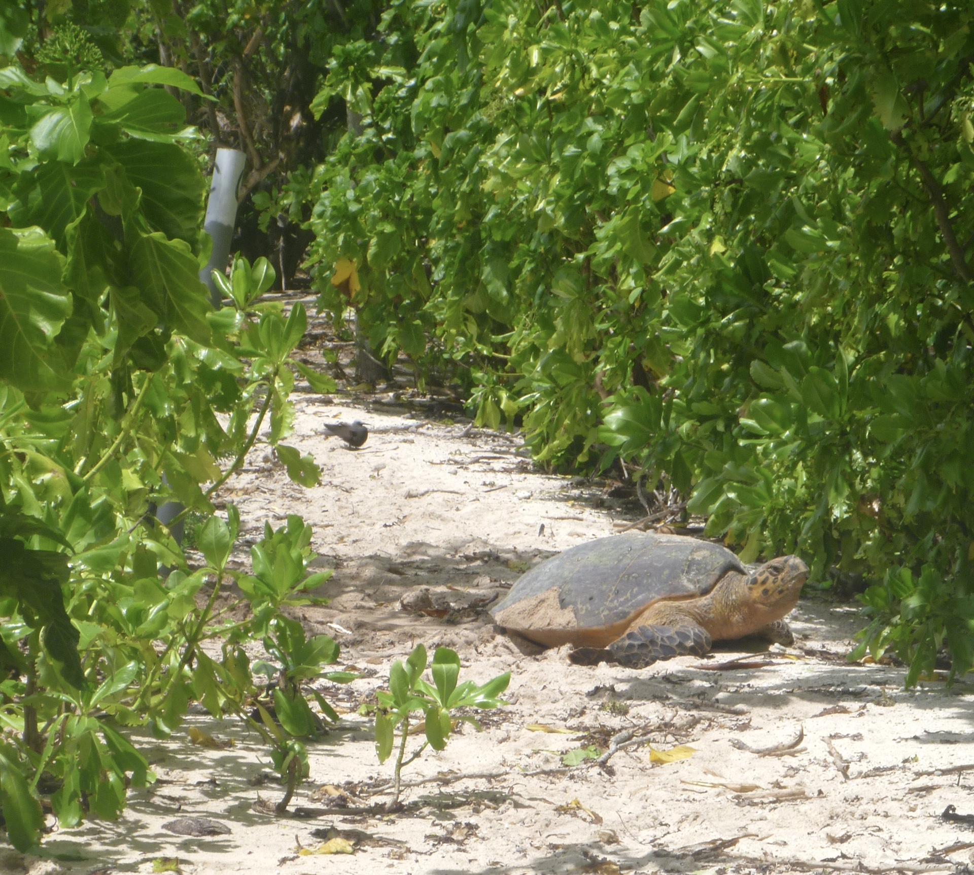 Unique experiences in Seychelles - daytime turtle nesting