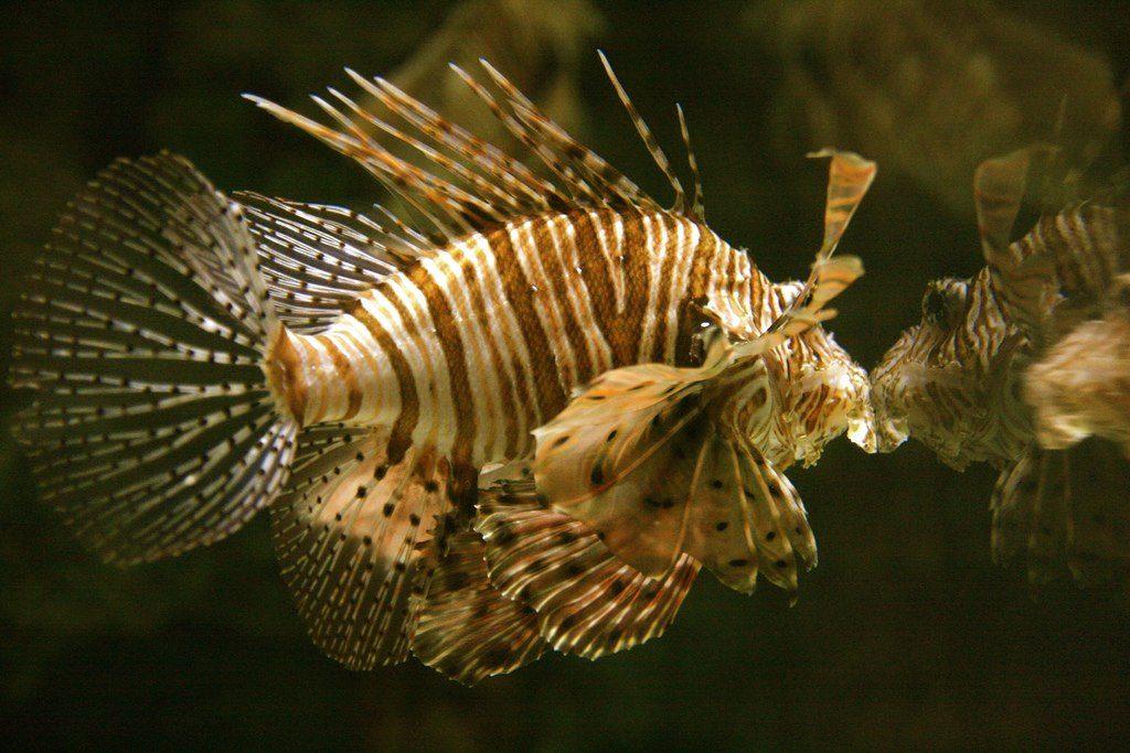 Fish inside Shark Reef | © Alexiswikipedia/WikiCommons