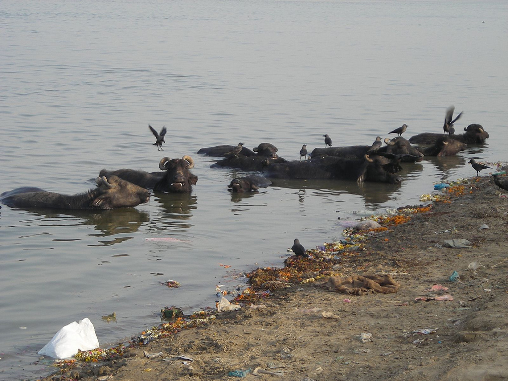 Can the India Court's Waste-Dumping Ban Save the Ganges River?