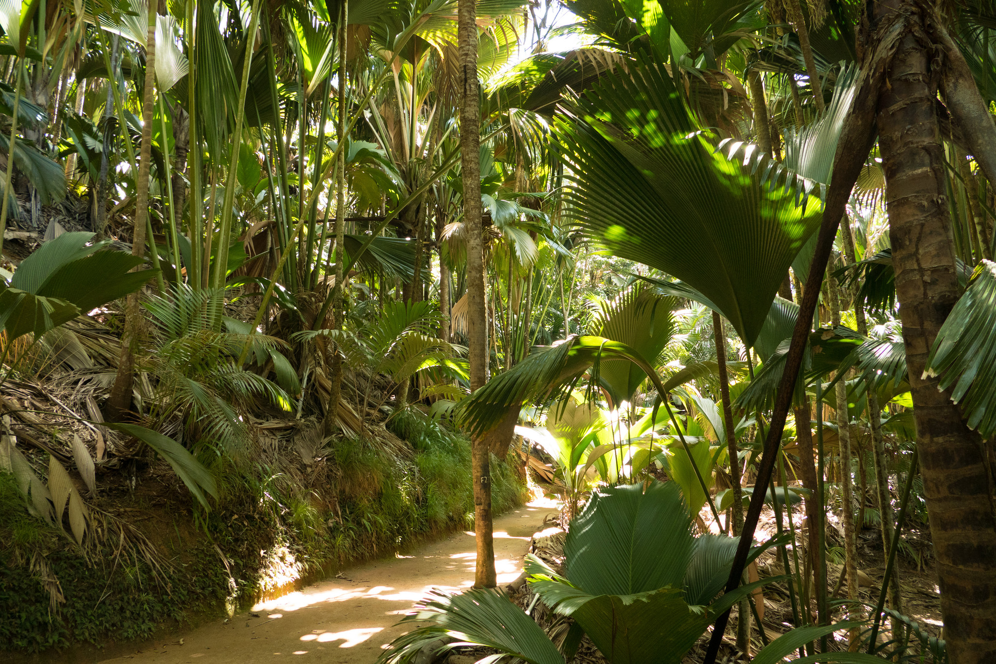 12 unique date ideas to try in seychelles - night walk at the vallee de mai