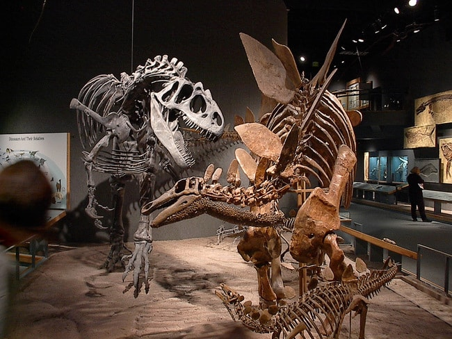 Imax Natural History Museum Denver Co