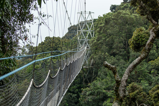 Canopy walk in Nyungwe National Park | © Justin Raycraft / Flickr