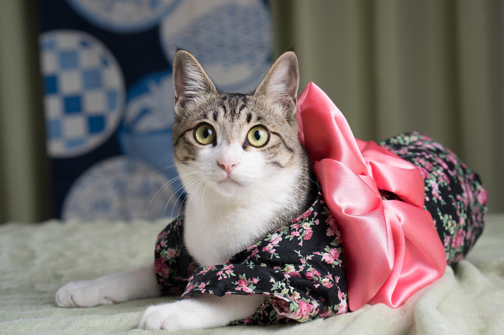 Child Feline Chic Cat Animal Costume