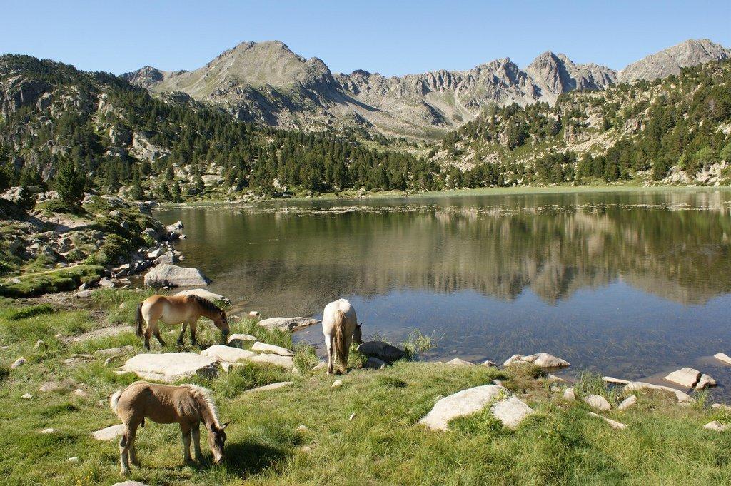 wild horses in Encamp, Andorra | © Ferran Llorens / Flickr