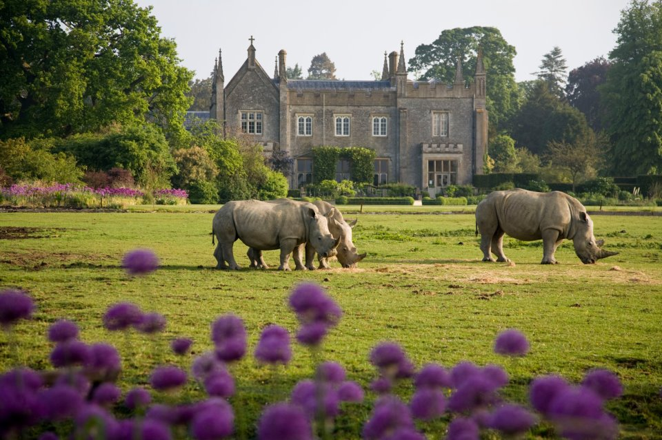 Rhinos at Cotswold Wildlife Park | Courtesy of Cotswold Wildlife Park and Gardens
