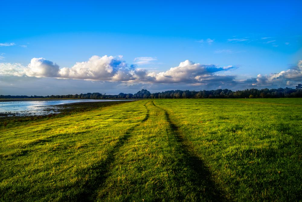 Port Meadow   © Justin Pinkney/Shutterstock