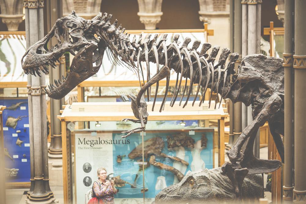 Oxford University Museum of Natural History   © Lyudmila Voronova/Shutterstock