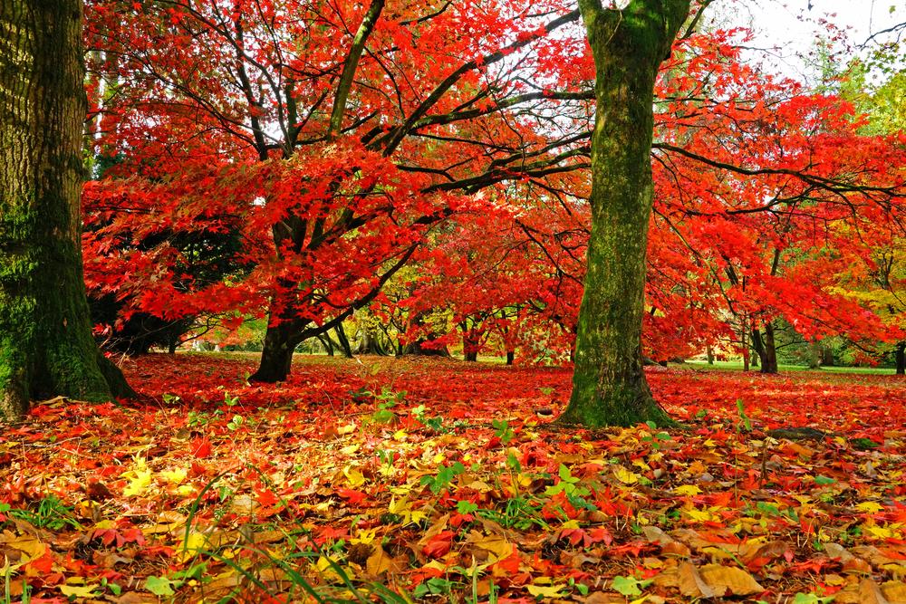 Westonbirt Arboretum | © PJ Photography/Shutterstock