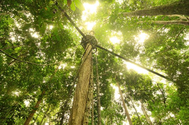 Canopy Walkway in Taman Negara | © Wong Yiu Liang/Shutterstock