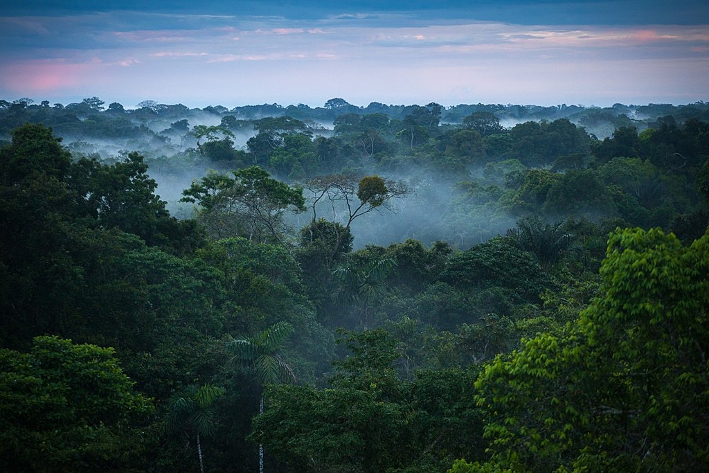 background information on the amazon rainforest and other rainforests In fact, indigenous, or native, peoples have lived in rainforests for many thousands of  of peoples and more extinctions of animals than any other in history.