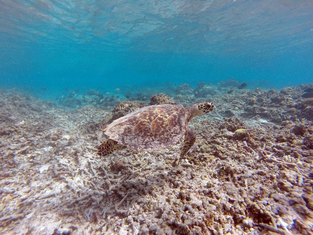 Snorkeling in Gili Meno   © Francesco/Flickr