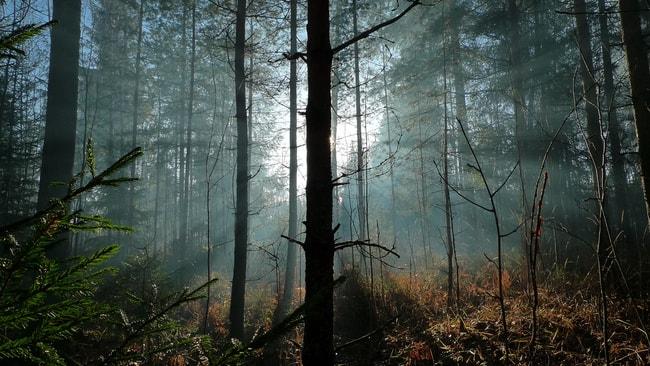 A forest in Finland | © neekoh.fi / Flickr